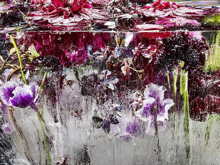 Удивительные снимки замороженных цветов.