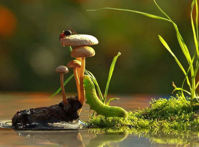 Фотографии грибов от Вячеслава Мищенко.
