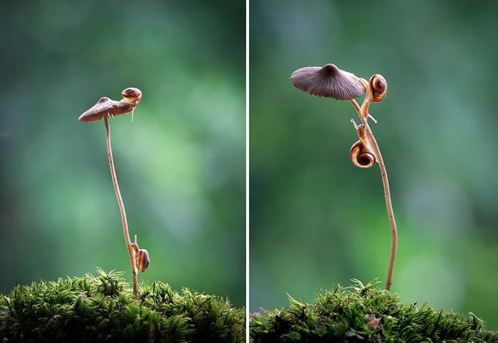 Сказочный мир грибов в режиме макро.