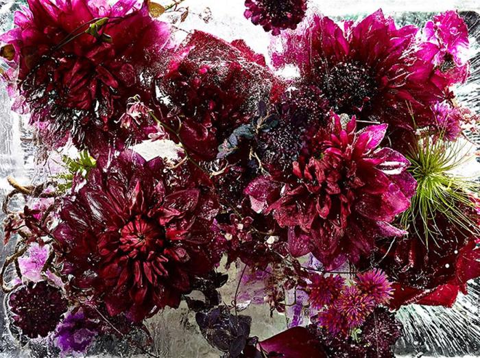 Цветы, замороженные в ледяных блоках.