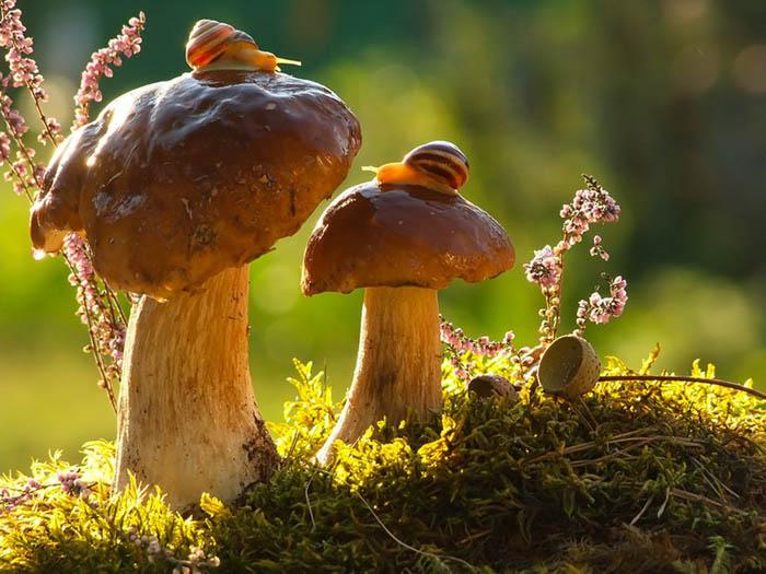 Удивительные фото грибов от Вячеслава Мищенко.