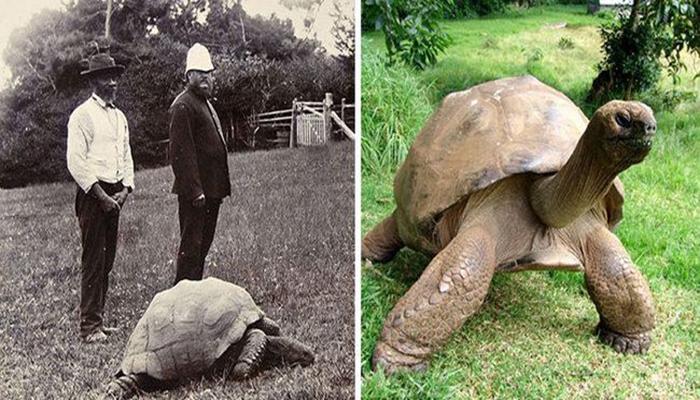 Самая старая черепаха в мире - 1902 и 2014 год.