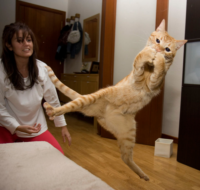 Кошки, пойманные в прыжке.