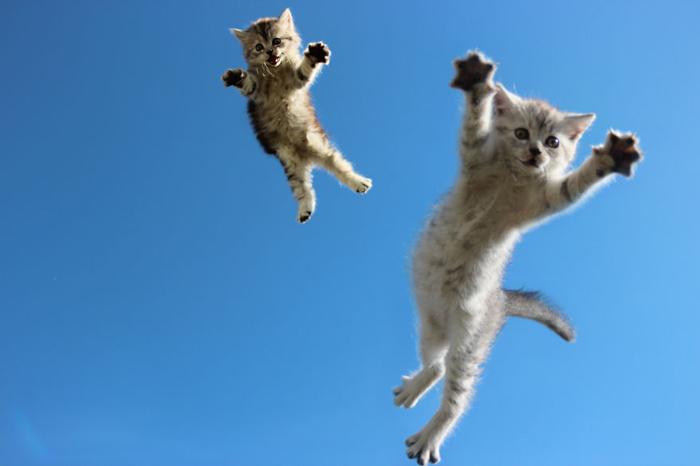 Коты в прыжке