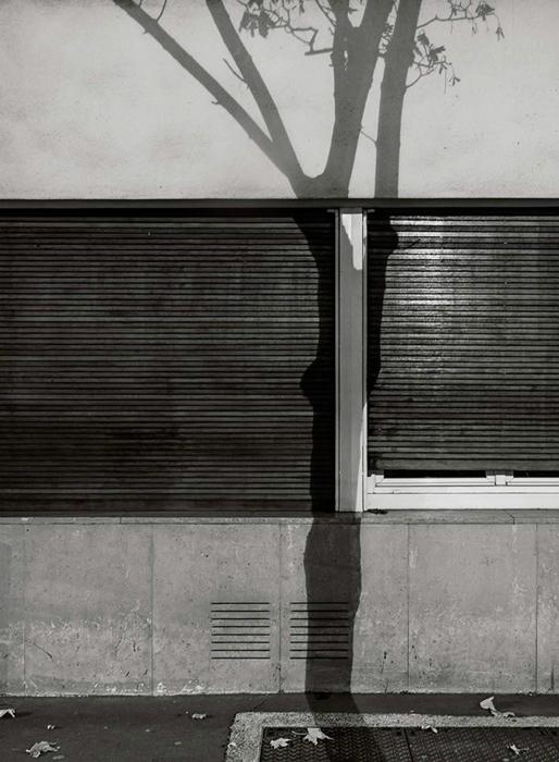 Фото теней от веток дерева.