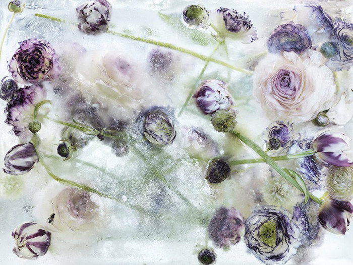 Фотографии цветов после заморозки.