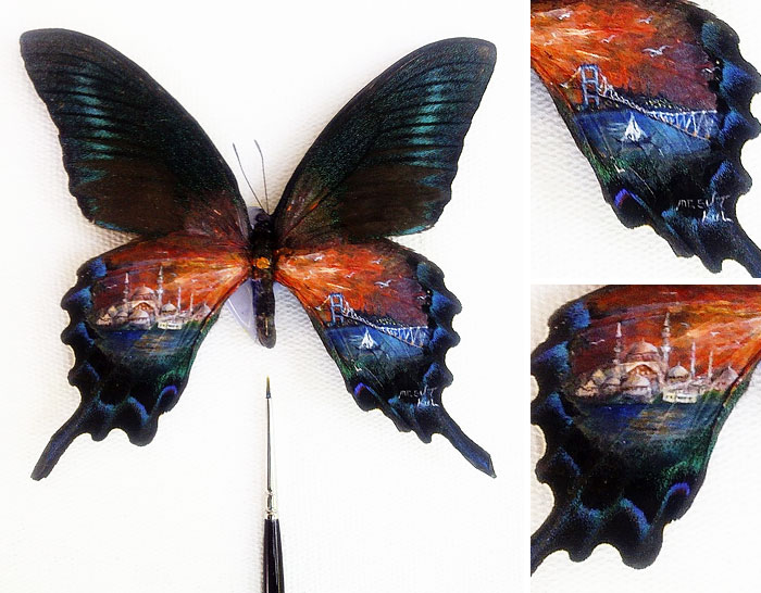 Рисунки на крыльях бабочки.