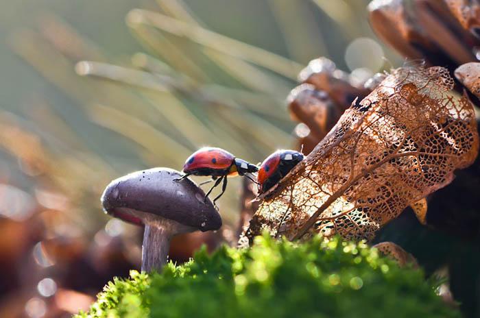 Трогательные фото грибов и лесных обитателей.