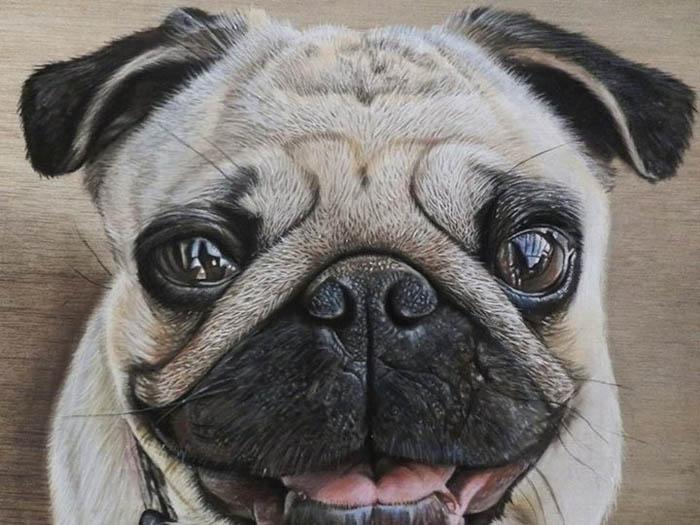 Рисунки собак и кошек в стиле гиперреализм.