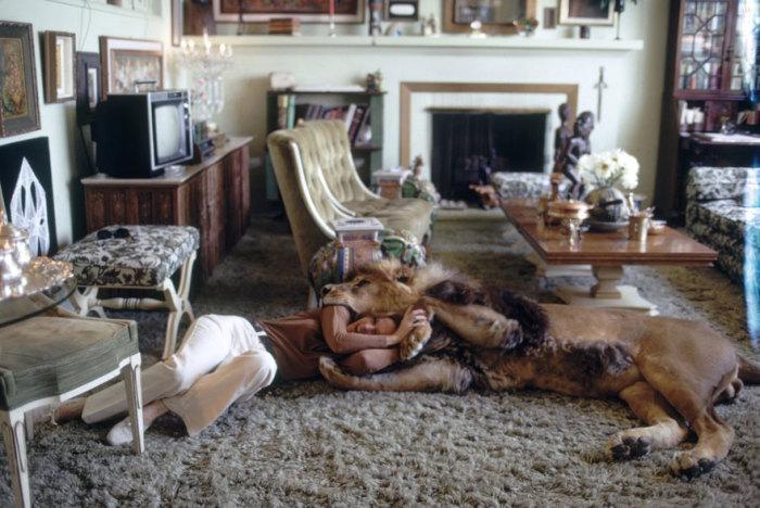Лев в гостиной.