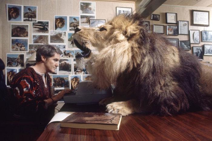 Лев на письменном столе Ноэля.