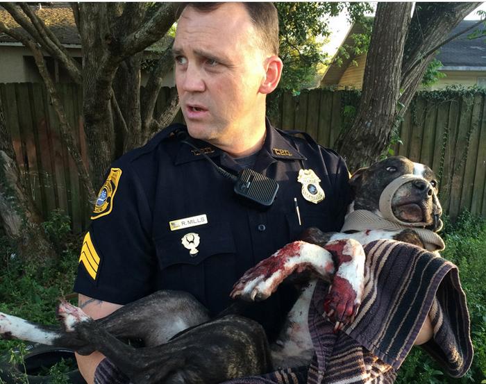Полицейский с собакой на руках.