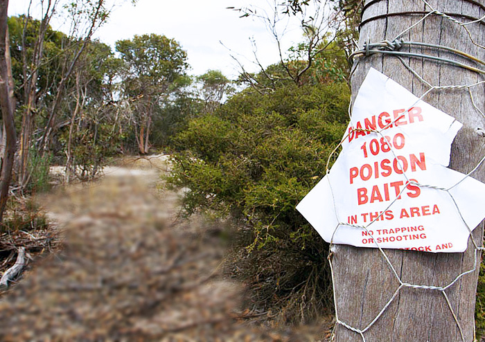 В Австралии собираются использовать яд для уничтожения кошек.