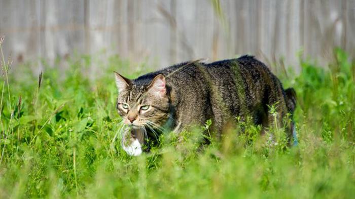 Кошки - хорошие охотники.