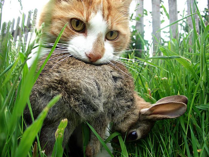 Коты стали представлять угрозы австралийской природе.