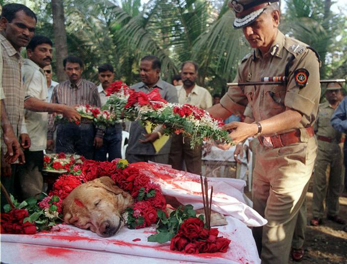 Жители Индии отдают почести служебной собаке.