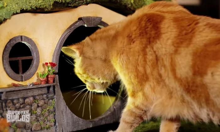 Кот исследует новую норку.