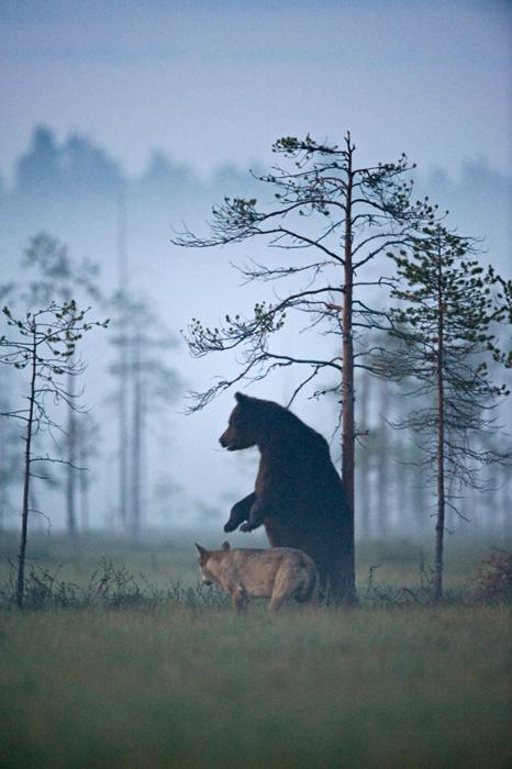 Необычная пара друзей в финских лесах. Автор фото: Lassi Rautiainen.