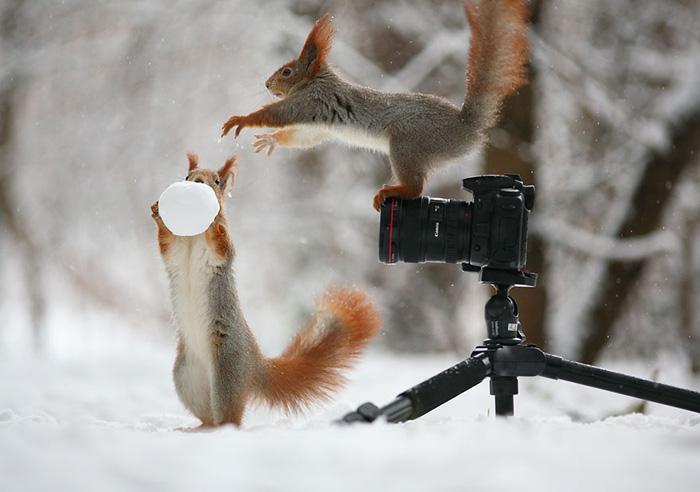 Зимняя фотосессия белок.