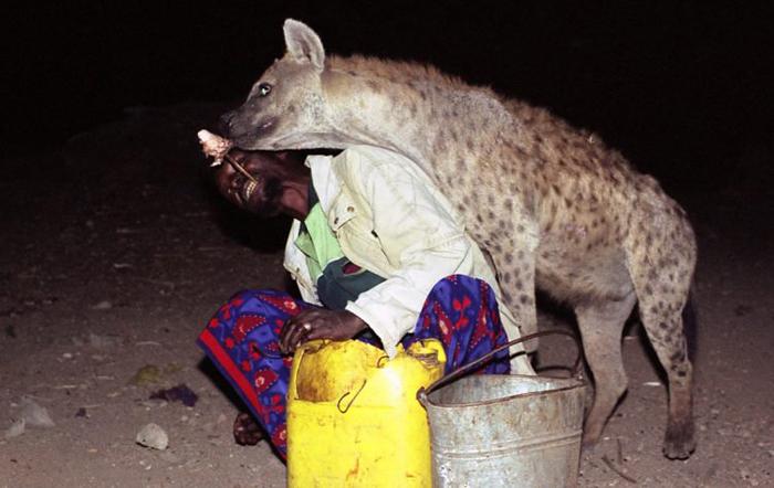 Люди, кормящие гиен с рук.