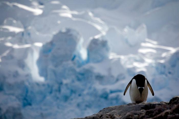 Антарктика в объективе Камилы Симен.