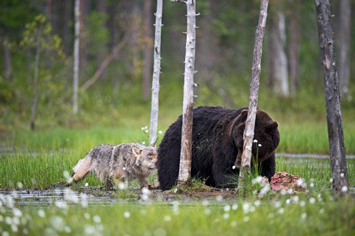 *Такое ощущение, что вместе они чувствуют себя в безопасности*. Автор фото: Lassi Rautiainen.