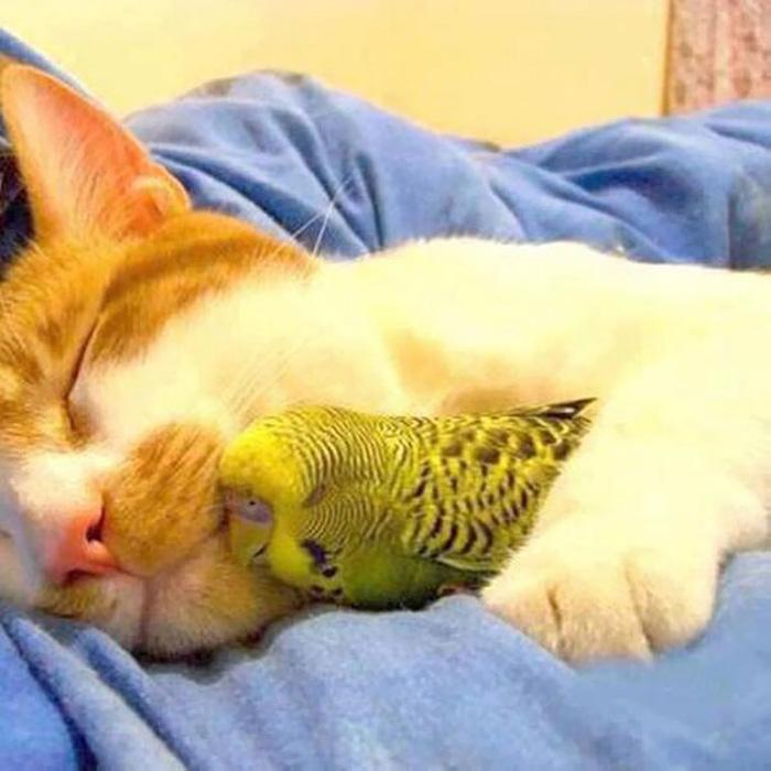Кот с попугаем.