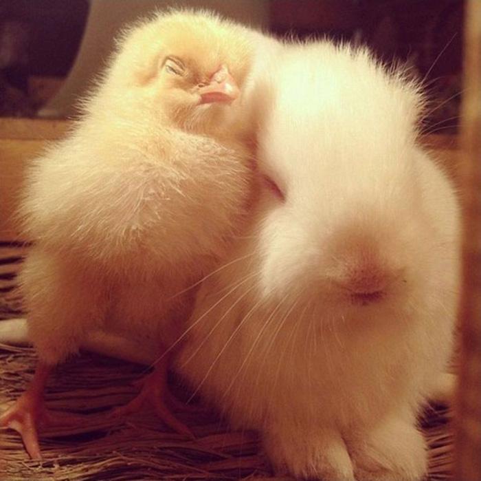 Цыпленок и кролик.