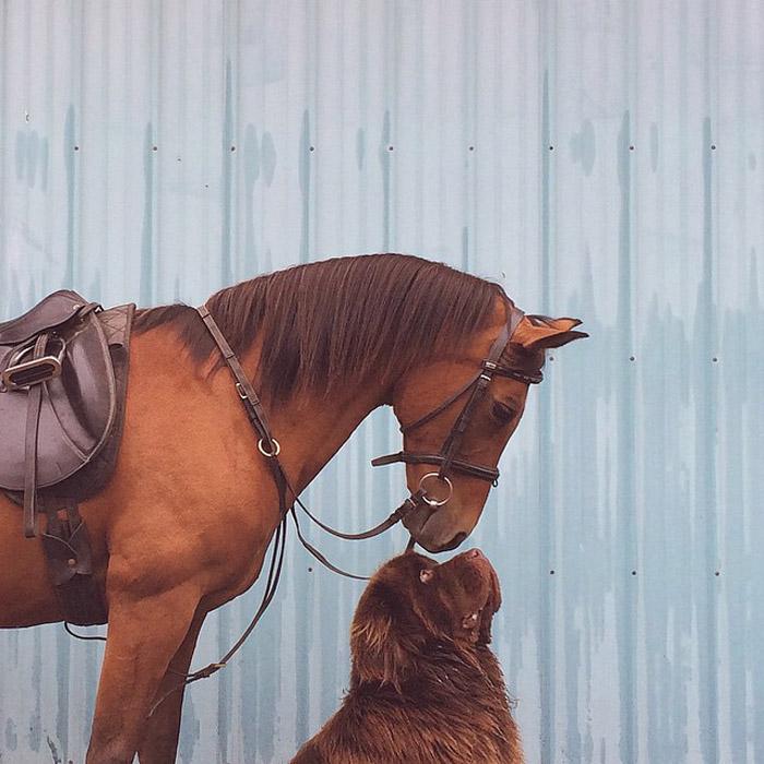 Брюс и Визон, два товарища. Автор фото: Stasha Becker.