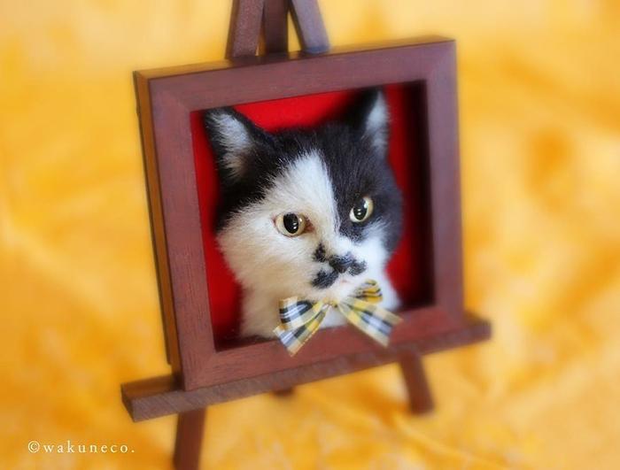 Тама-кун, котик из приюта. Instagram Wakuneco.
