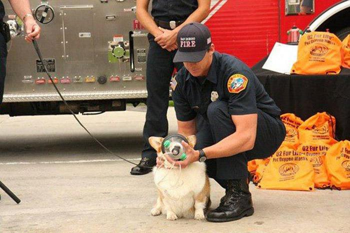 Пожарная бригада Нового Орлеана теперь может оказать первую помощь не только людям, но и животным.