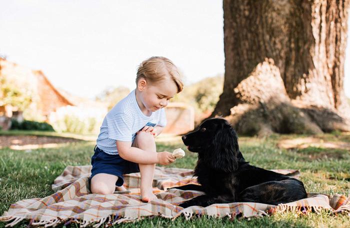 Принц Джордж угощает спаниеля Лупо своим мороженым.