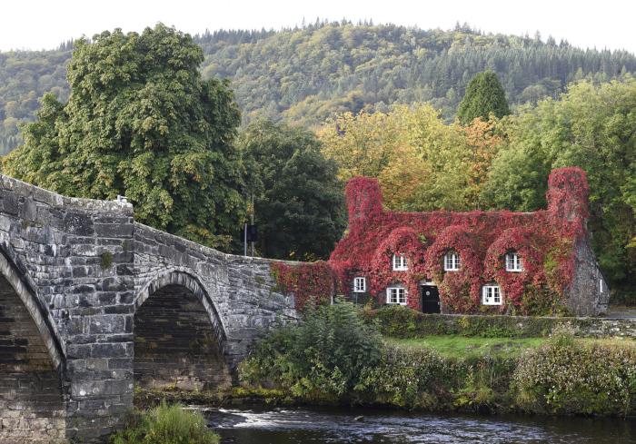 Плющ покрывает чайный домик, построенный в 15м веке в Конви, Уэльс. 25 сентября 2015г.