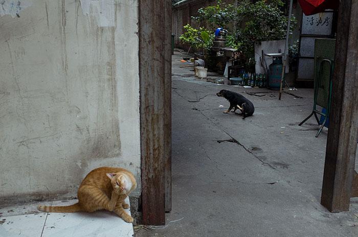 Уличные животные.