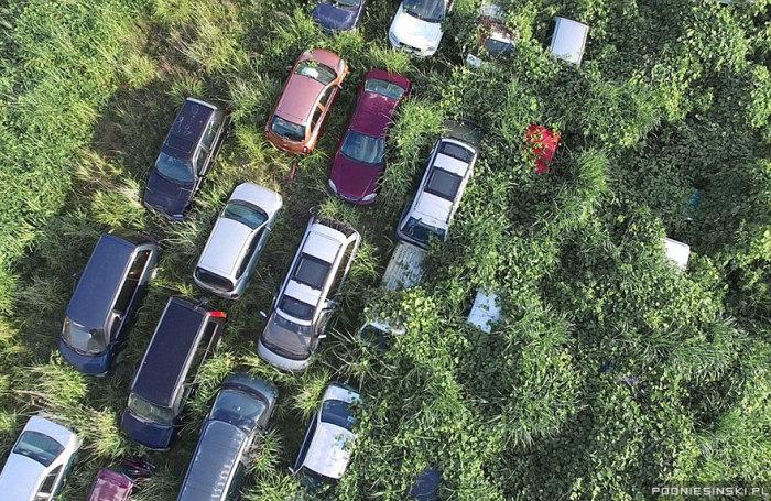 Некоторые из машин полностью исчезли в высокой траве.