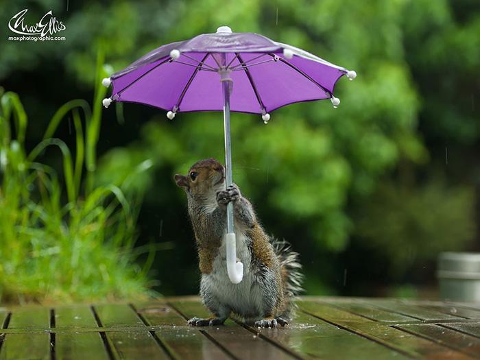 Под зонтиком не капает.