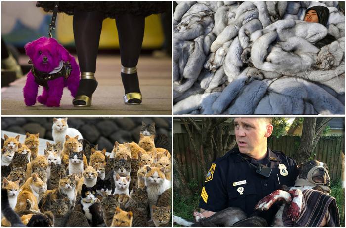 Животные в новостях.