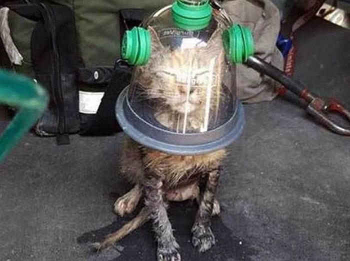 Спасенный котенок.