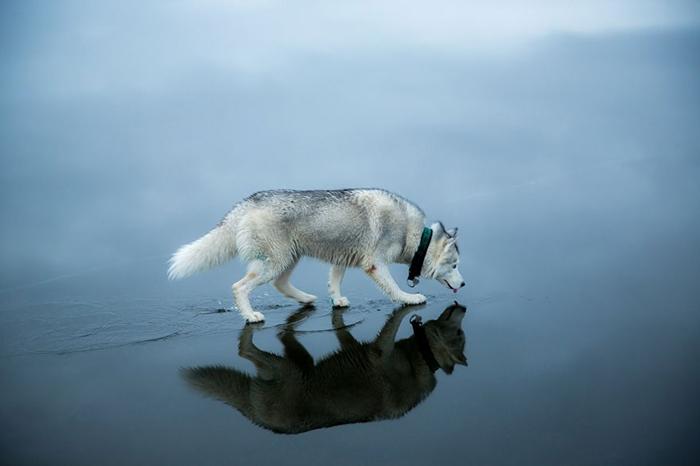 *Я могу ходить по воде!*