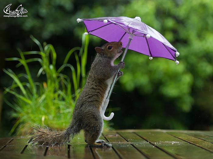 Укрытие от дождя.
