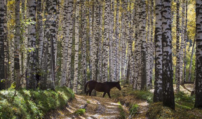 Солнечный осенний день, лошадь прогуливается за пределами города Алматы, Казахстан. 2 октября 2015г.