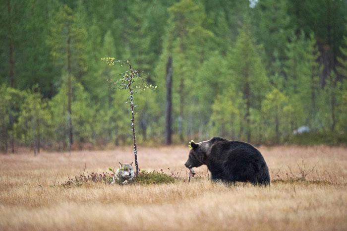 Минуты отдыха. Автор фото: Lassi Rautiainen.