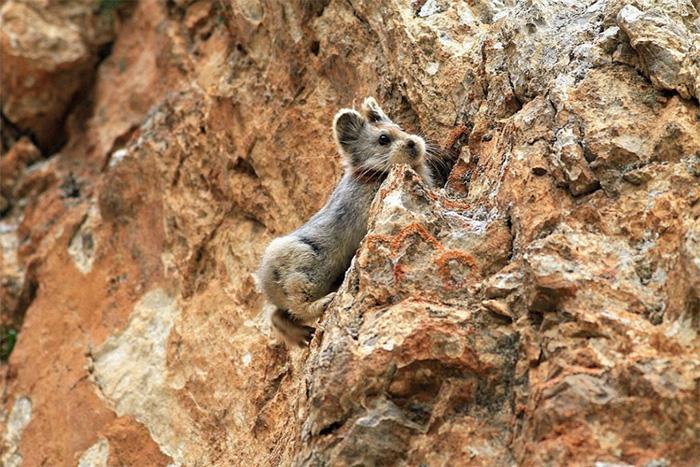 Магический кролик в горах Тянь-Шань.