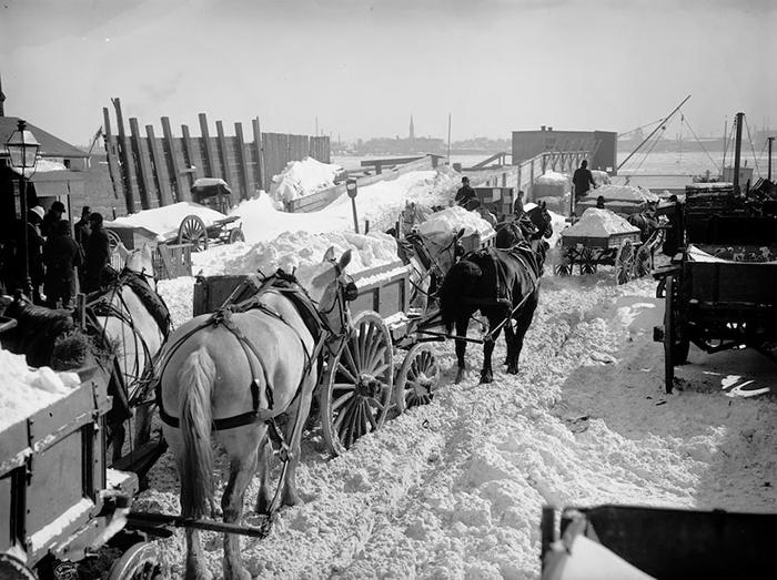Снег на телегах вывозят из Нью-Йорка и сбрасывают в реку.