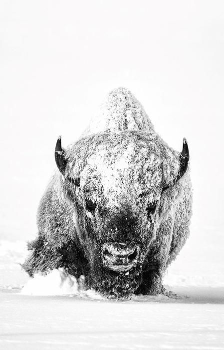 «Enduring Spirit». Фото: Derek Jerrell.