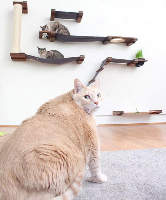 Пока Бронсон не может играть с другими котами - он просто не помещается на их лежаки и не может к ним даже приблизиться. Instagram iambronsoncat.