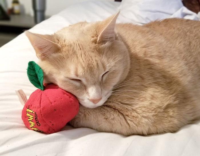 Игрушки с кошачьей мятой - любимые у Бронсона. Instagram iambronsoncat.