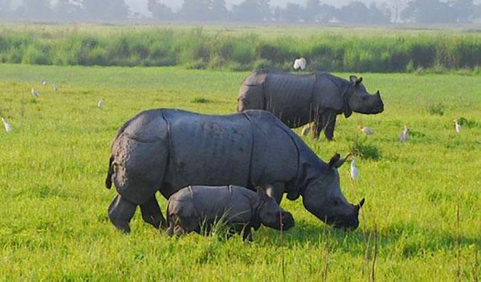 С каждым годом численность носорогов неумолимо уменьшается.