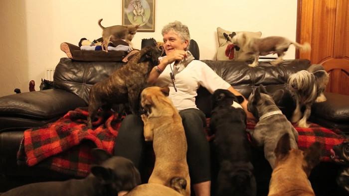 Четыре десятка собак в доме семейства Эверетт.