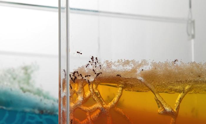 Аккуратная работа муравьев-тружеников.